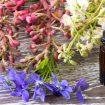 Régime : 5 fleurs de Bach pour ne pas flancher !