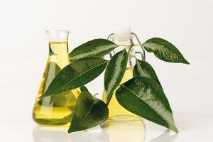 L'huile essentielle de Ravintsara contre  les maux du froid