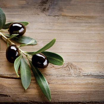 Les vertus des feuilles d'olivier sur les candidoses