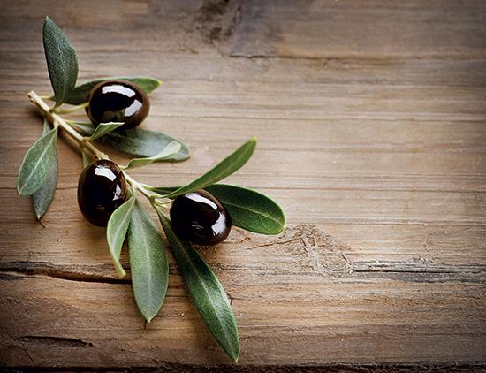 Les vertus des feuilles d'olivier sur les candidoses   Bio Infos Santé