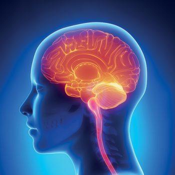 brain-180