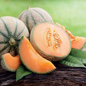 melon-180