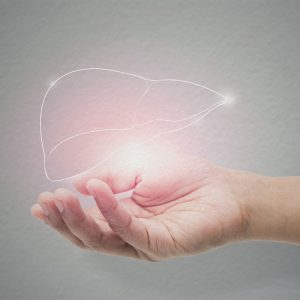 L'importance du foie pour notre santé