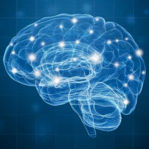 A propos de l'axe cerveau intestins