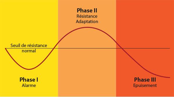 Les 3 phases du syndrome général d'adaptation au stress